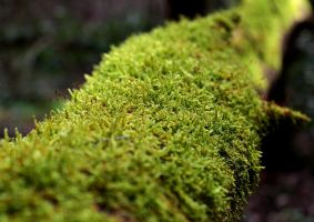 Bed of Moss by Soso-sama