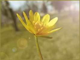 yellow flower by Didix1122