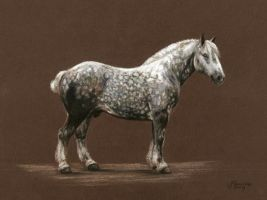 Percheron by JustSkowronek