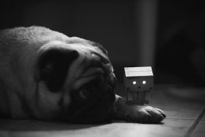 Outtake Pug and Danbo by DesignJunkyGrafix