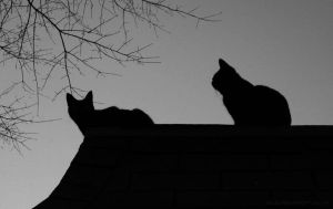 Watch Cats by Aleuranthropy