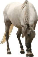 white mare looking to the ground precut png by Nexu4