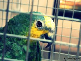 Parrot in a Cage by Selenaru96