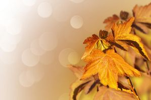 Background from autumn leaves by Tumana-stock