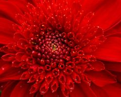 Red Heart by Elsabet917