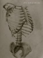 ribcage by TurnerMohan