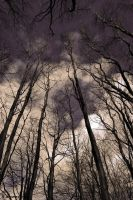 Reaching for the sky by ZanaSoul
