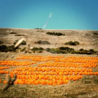 The Secret Pumpkin Patch by VisualIntake