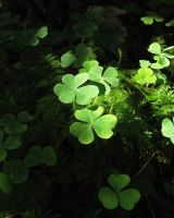 Woodland Clover by dhc72