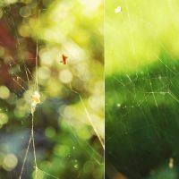 webs by dosske