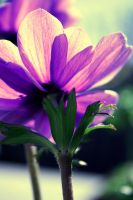 Anemone by Michael-the-3rd