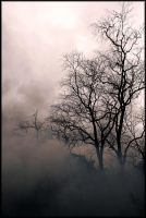 The Forest's Silhouette by 41010