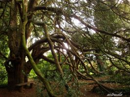 The Old Yew Tree by Estruda