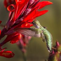 Yet another Hummer by DGAnder