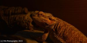 Whats up! by MA-PHOTOGRAPHIC