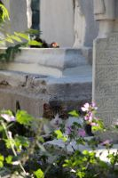 Istanbul - Cat at tombstone by puppeteerHH