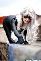 Cosplay: Black Cat on the wall by Yukilefay