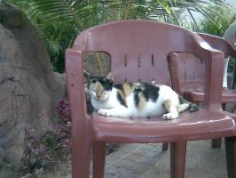 CAt in The Chair by emina24