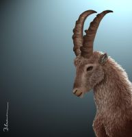 Steinbock...Capricorn by Blueraven90