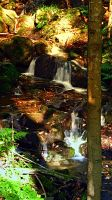 Little waterfall in the forest by patrickjobst