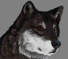 Wolf by Kerveros540