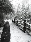snow path by hannahlrobinson