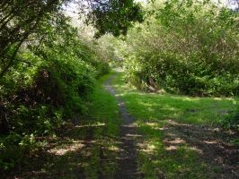 Nature Path 01 by Treeclimber-Stock