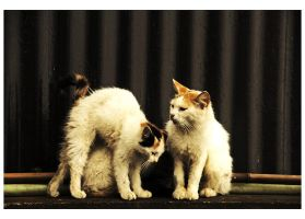 Two and a Half Kittens by sasonian37