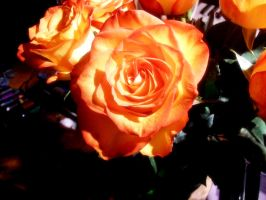 Orange Roses by GestianPoet21