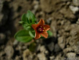 Flower Among Rocks by OneofakindKnight