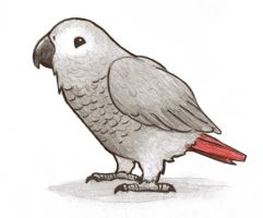 Cute African Grey by Saintbirdy