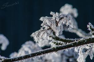 Winter's Crown by Smunkl