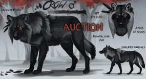 Big black spooky wolf auction: Closed by KFCemployee