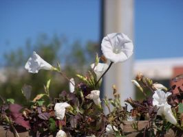 Flowers on a Fence by LaEmperatrizMariana