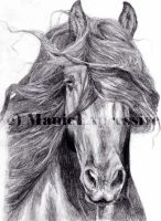 Friesian by ManicExpressive