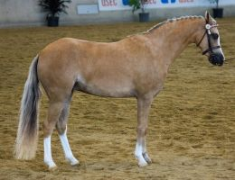 STOCK - 2014 Arabian Gala-63 by fillyrox