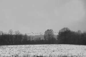 gray days by Mjag