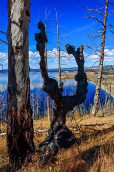 Dancing tree near Butte lake, Yellowstone NP by boradaphotography