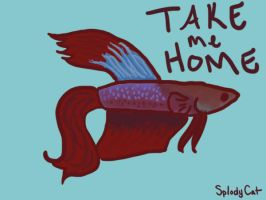 Betta Fish: Needs a Home! by myexplodingcat