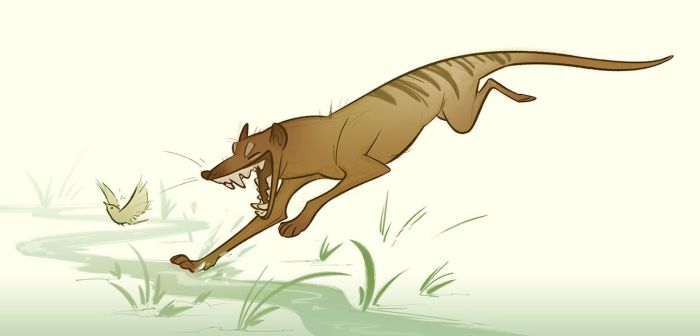 Thylacine by CoconutMilkyway