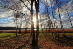 beautiful trees 13 by MT-Photografien