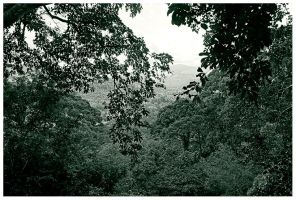 Rainforest by PvP