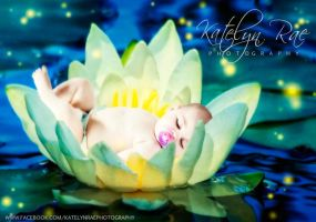 Water lily by katelynrphotography