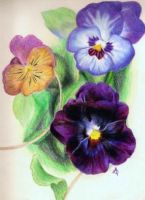 Pansies by BellaRosie