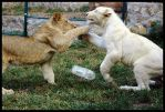Cat fight by Sirennia