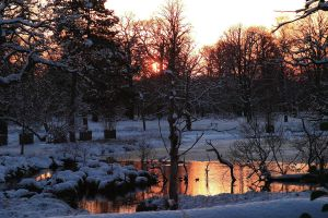 Snowy Sunset, Dunham Massey by RavenSummerisle