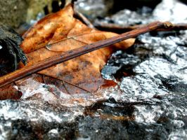 Old Autumn Leaf by meggyweggy