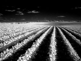 infrared soy bean field by foodshelf