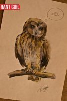 owl by RantGoil