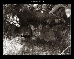 Pretty cat II by 0Karydwen0